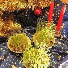 4 décembre sainte barbe: faire pousser blé ou lentille